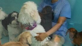 doggie care